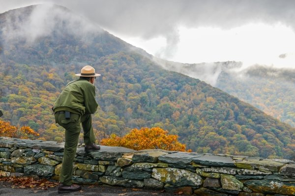 A forest manager overlooks a forest