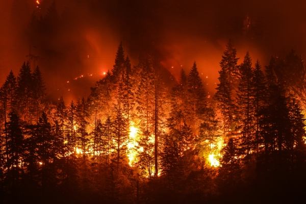 Wildfire burning through a forest at night