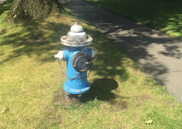 Fire hydrant with blue body and white cap and nozzles