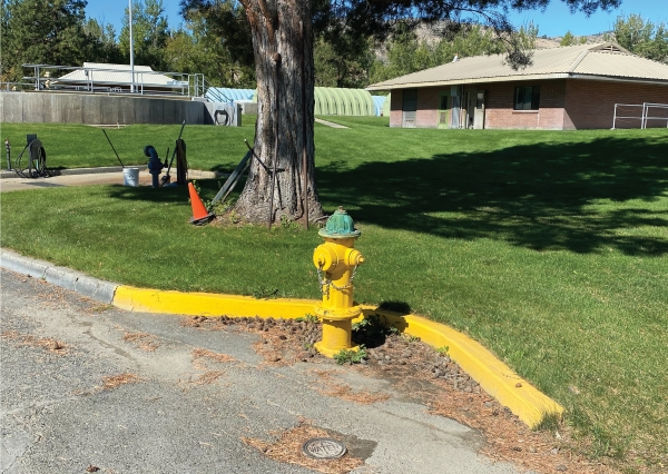 Fire hydrant with yellow body and green cap