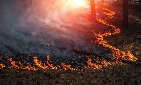 wildfire-risk-tool-press-release